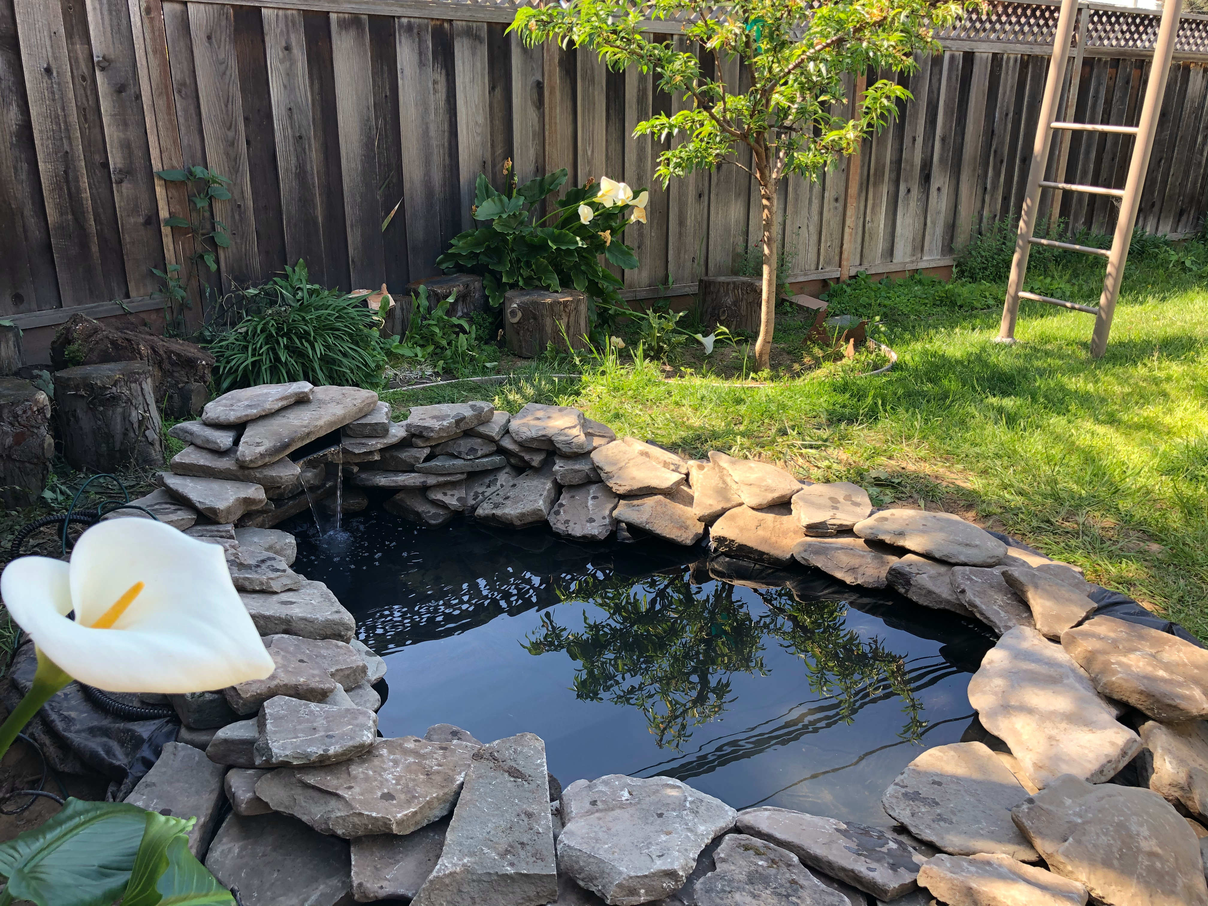 How to Build a Backyard In-Ground Garden Pond with ...